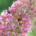 Consider a Pollinator-Friendly Garden