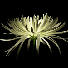 Photographing Flowers by Painting with Light