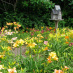 Daylily Garden (In Demonstration Gardens)