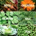 Sow Seeds Now for an Easy and Delicious Fall Garden
