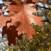 Autumn @the Arboretum &#8211; Free Fall Festival